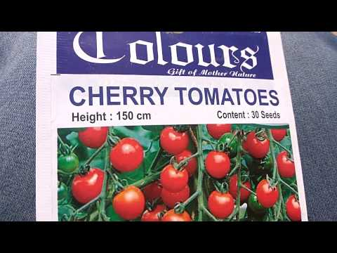 How to grow cherry tomatoes 🍅 from Seed(20/03/17)