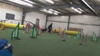 Pomeranian-mix In Dog Agility Handling Class (1st Of 7)