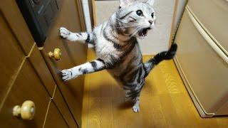 猫缶で嬉しい気持ちダダ漏れな猫 thumbnail