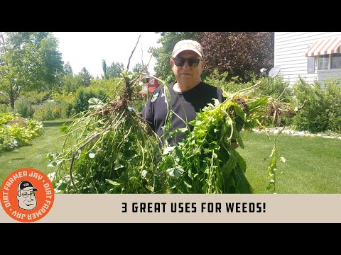 3 Great Uses for WEEDS!