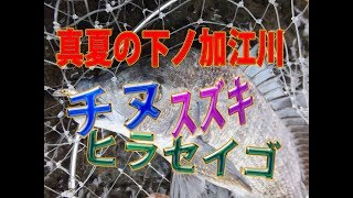 高知県西部 下ノ加江川 夕方の満潮時の釣り 2017年8月21日