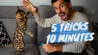 Learn 5 CAT TRICKS in 10 minutes - Easy & Cool Clicker Training Tricks