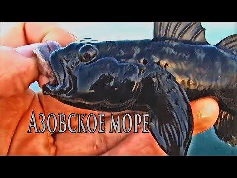 Азовское море | Подводная съемка | Снасть | Рыбалка