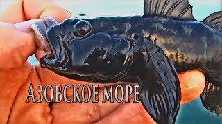 Азовське море | Підводна зйомка | Снасть | Рибалка