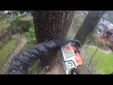 bomen verwijderen met