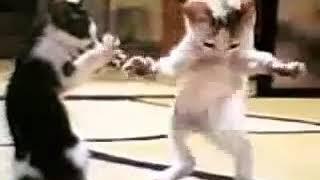 Dans eden kedi (kürtçe arapça  )