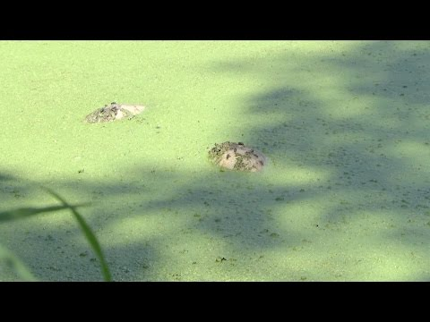 Delaware Riverkeeper Network video Upper Mount  Bethel Township fish kill