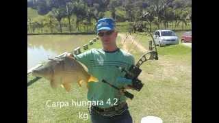 Pesca de carpa com arco e flecha - PSE Archery.