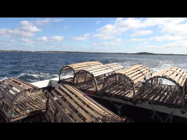 Lobster Fishing with Miss Learys Cove