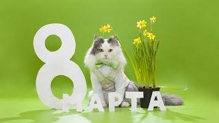 8 марта Говорящие коты поздравляют всех с международным женским днем(Cats LIVE)