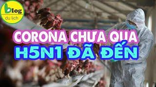 VI RÚT CORONA chưa qua CÚM A H5N1 đã tới