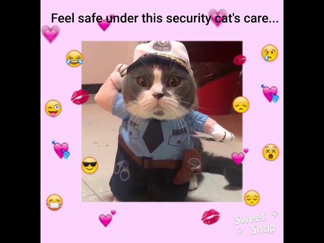 Sweet Snap: Cat dressed up in a security uniform