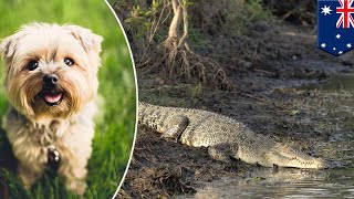 croc-gets-revenge-on-dog-that-tormented-it-for-years---tomonews
