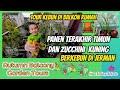 - Panen Timun dan Zucchini Terakhir   Tour Kebun di Balkon Rumah   Berkebun di Jerman