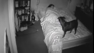 Paranormal Activity CCTV Ghost Footage  Bossy the Psychic Dog