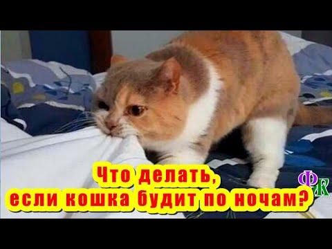 Что делать, если кошка будит по ночам? Полезно знать о кошках