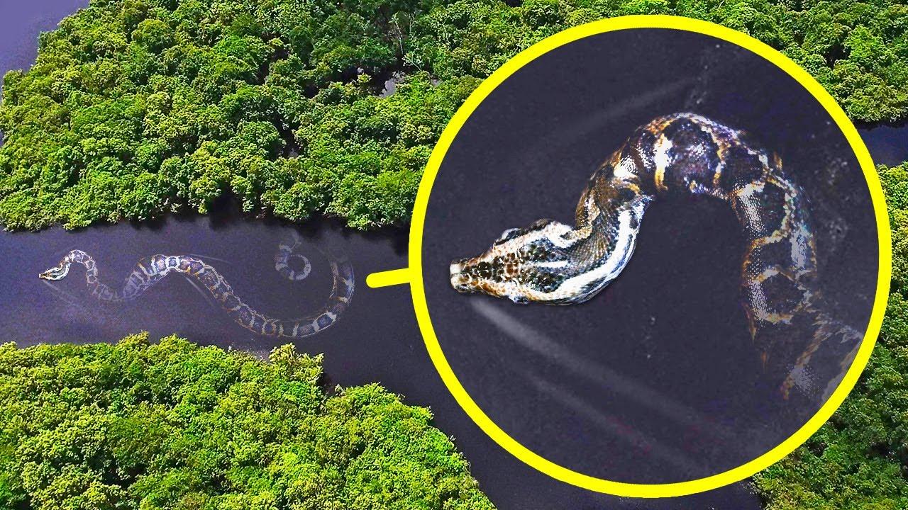 アマゾンで生息する世界で最も重たいヘビと17種のモンスター