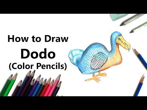 How To Draw A Dodo With Color Pencils [Time Lapse]