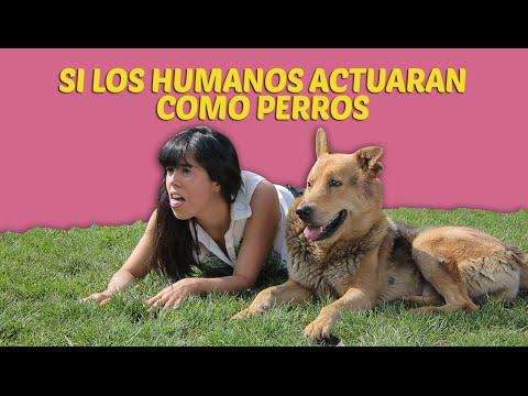 Si los humanos actuaran como perros