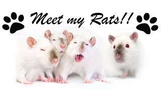 Meet my Rats!!! | Time to get Fancy