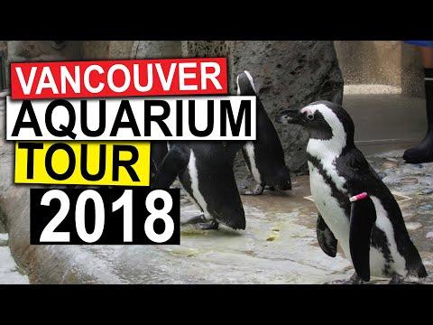 Vancouver Aquarium TOUR (2018)