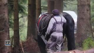 Waldarbeiter auf vier Beinen