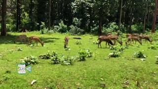 Nagarahole National Park  trip || india || The herd of deer