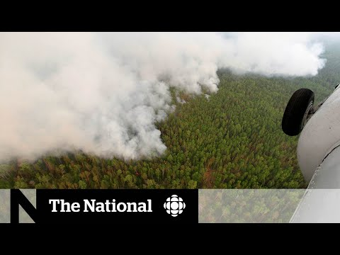 CBC News: The National: Siberian heat wave, forest fires could have global consequences