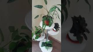 Напольная полка для цветов «Флора-2»