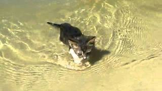 Кошка плавает в воде