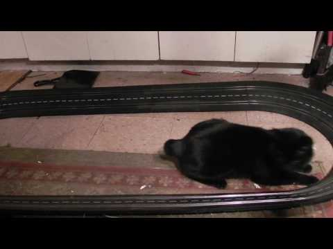 Manx cat meets Marklin sprint slot car track and I think he likes it!