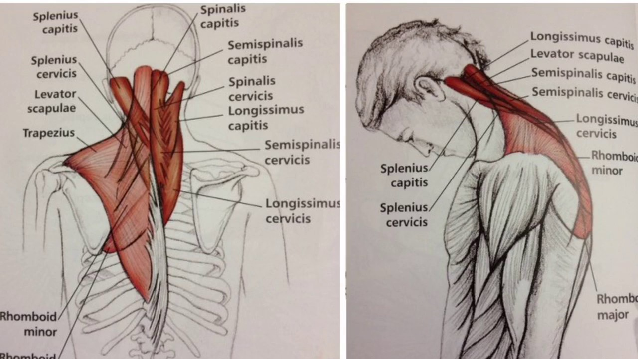 Neck pain relief using acupressure points :Aculife ...