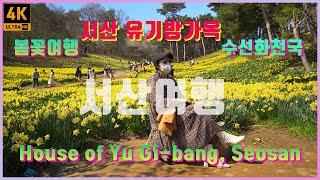 [4K 국내 서산 유가방가옥 수선화 봄꽃 여행] 국내 …