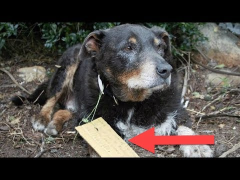 A Family Didn't Know What Had Befallen Their Lost Dog  Then He Returned With A Note On His Collar