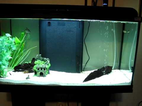 freshwater fish tank 25 gallon youtube