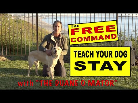 Teach Your Dog To STAY - The FREE Command - the Release - Dog Training Video