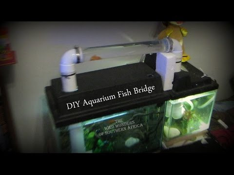 DIY Aquarium Fish Bridge