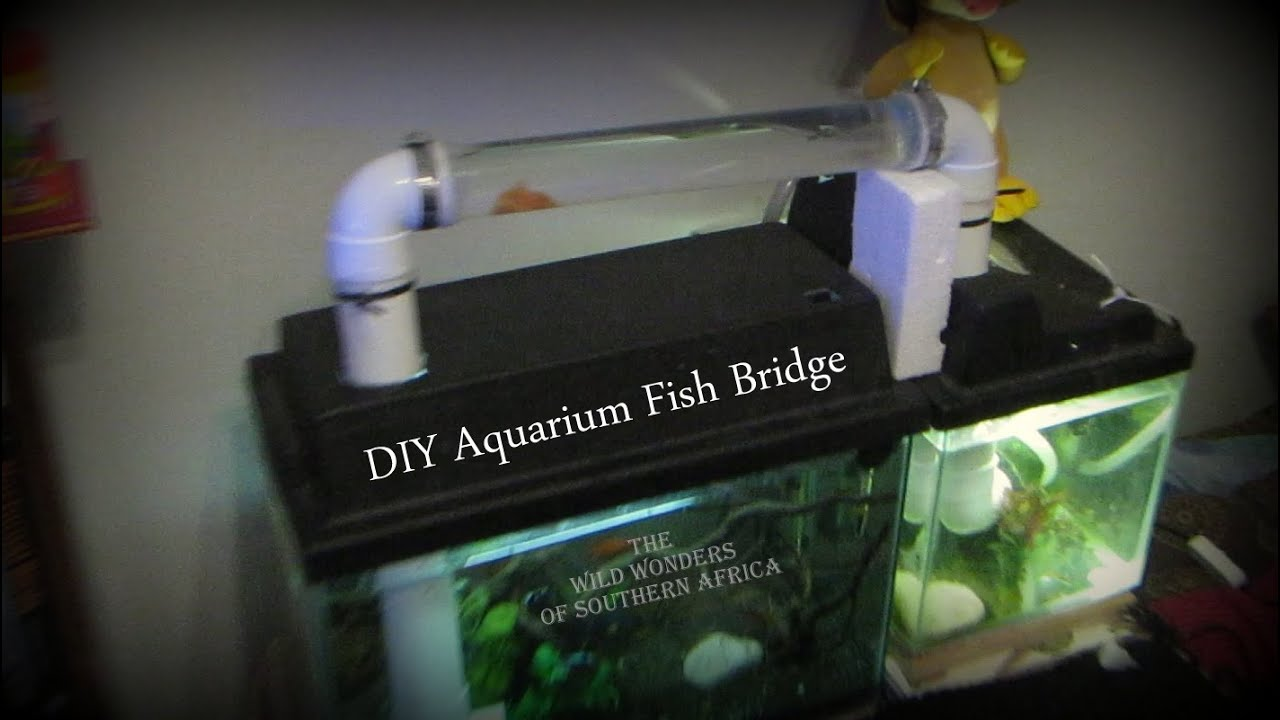 Diy Aquarium Fish Bridge Youtube