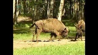 Экология. Охрана природы(Промо ролик видеопособия «Экология. Охрана природы». Первый образовательный канал. Получить полную информ..., 2013-03-26T12:25:46.000Z)