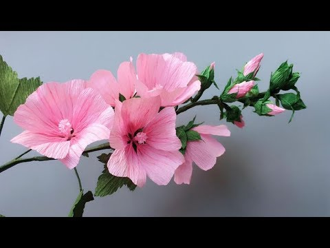 Abc Tv How To Make Lavatera Rosea Paper Flower From Crepe Paper Craft Tutorial