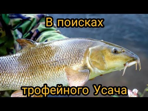 Рыбалка на донки с ночевкой на горной реке, в поисках усача!