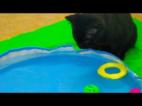 Cute Kitten Plays in Barbie Swimming Pool