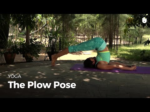 Learn the Plow Pose Halasana | Yoga
