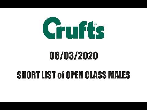 Crufts 2020 / Golden retrievers / Short list of Open Class Males