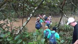 Тропический лес Гавайи. Компания FFI.