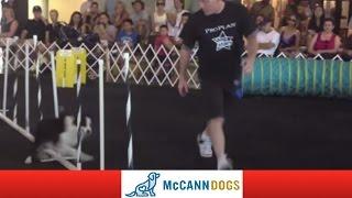 Dog Agility Toronto: Dog Agility At Pawsway