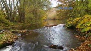 видео Природа осенью. Ноябрь