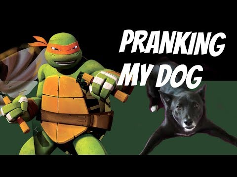 Scary Teenage Mutant Ninja Turtle Prank on my Dog!