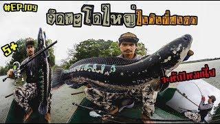 #ตกปลา #ปลาชะโด #giantsnakehead (ตอนที่ 109) ตกปลาชะโดโคตรใหญ่ในวันฝนตก  #pong posamton