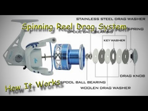 How A Spinning Reel Drag System Works